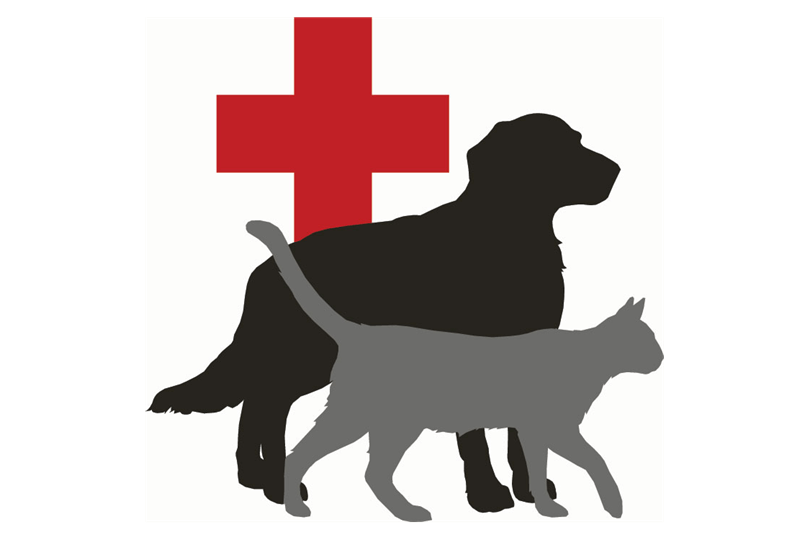 dog red cross logo